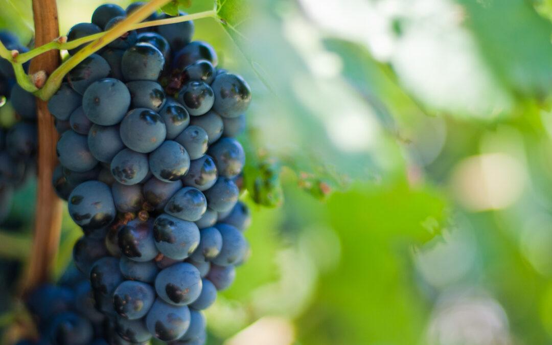 Franschhoek Wine Farms