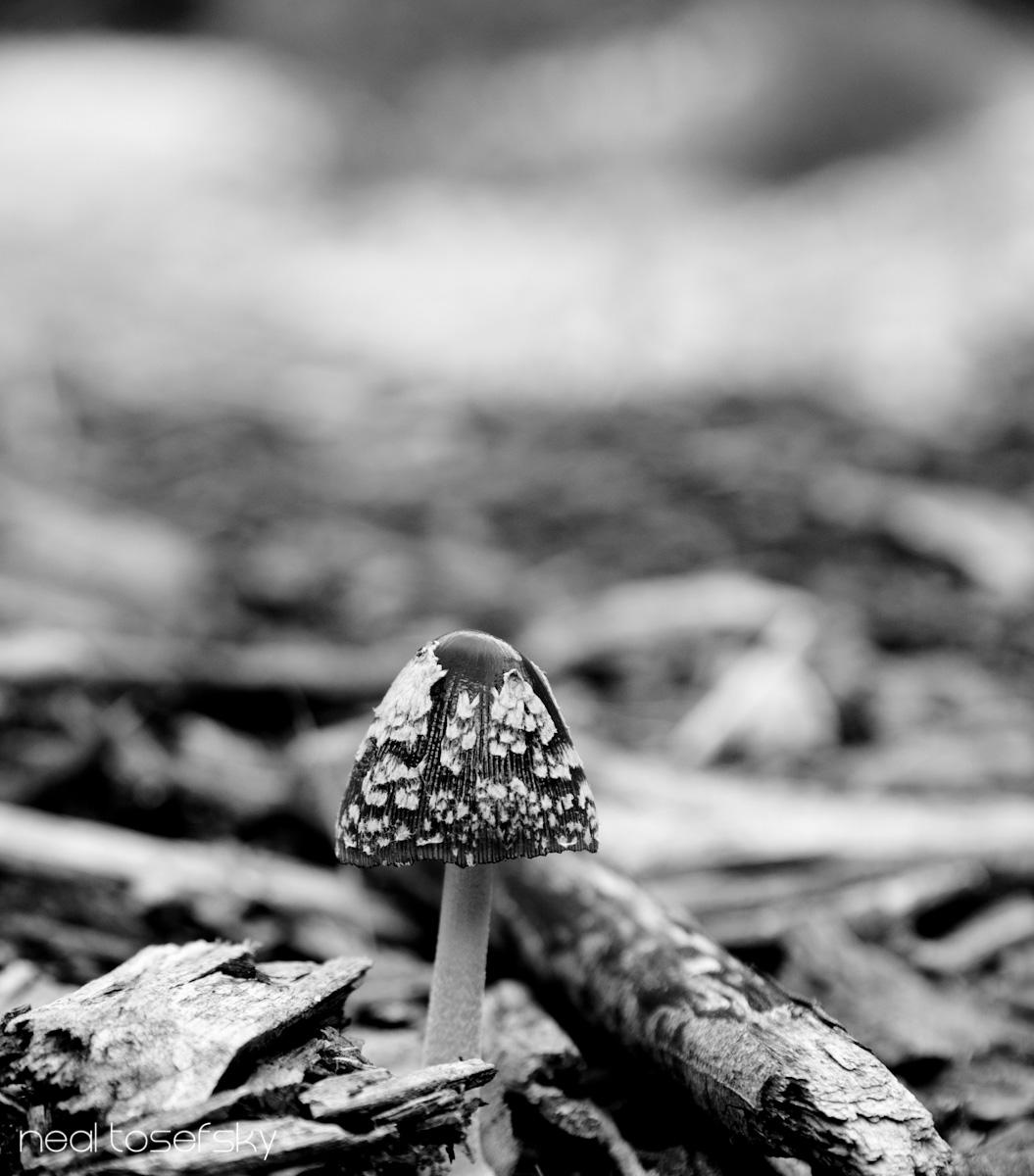 Mushrooms In Swellendam