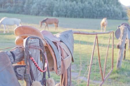 Farm Animal Life